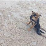 ¡Inspirador! Encontró a un perro paralítico y esto fue lo que hizo con él --> http://t.co/ueB6n6IeU1 http://t.co/4sOdYERdMd