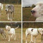 """""""Lily es el perro blanco, perdió los ojos y desde hace 5 años otro perro le hace de guía. Un ejemplo a seguir!!"""" http://t.co/2k5lwh89q6"""