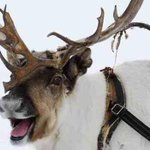 Real reindeer in @GuildhallExeter today? Pop in and visit  @Radio_Exe to see them and Santa!! http://t.co/TyBCXOA3cg