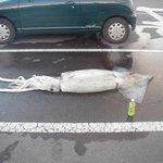 車を停めて買い物して戻ってきたら車がなくなっててイカとお茶が置いてある国、日本 http://t.co/97I3ei2Huz