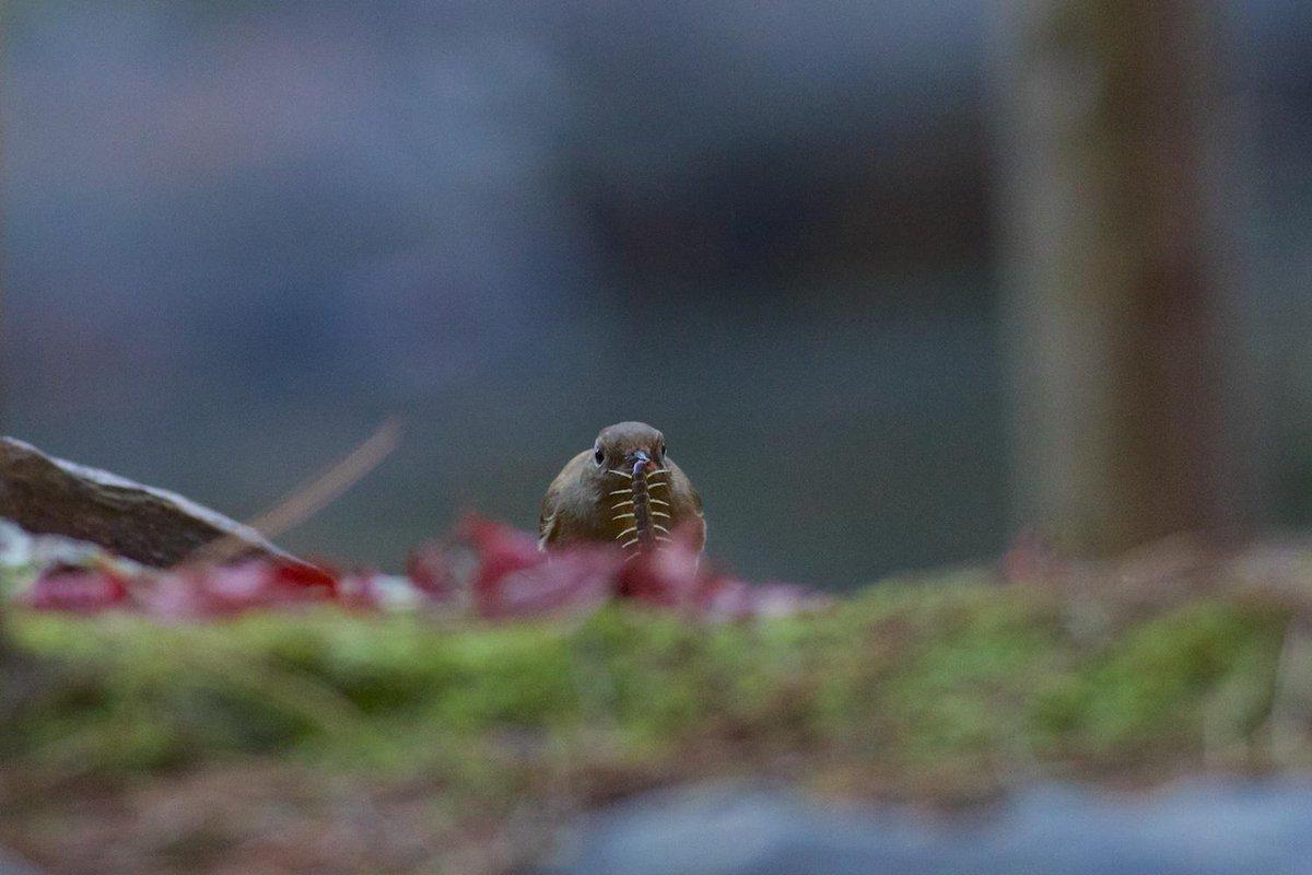 美女は言います。虫がいるから鳥がいるんですよ、と。 http://t.co/3SyNSyGBdG