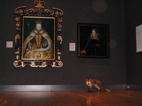 Love this: RT @fcmalby Surveillance observes fox exploring National Portrait Gallery at night http://t.co/zWPiqlGtyN via @Soniasuponia