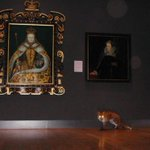 Surveillance cameras observe a fox exploring the Tudor and Georgian rooms of the National Portrait Gallery at night http://t.co/8o8CFVxyLO