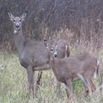 Hunters do some last minute prep for the gun deer season opener, @WEAUSpreiter reports. http://t.co/TnGYcmvUcH #WEAU http://t.co/Q9y5bu2GDK