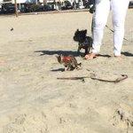 Badass kitty shitting on the beach! (@ Laguna Beach in Laguna Beach, CA) https://t.co/NlQyDJlSwp http://t.co/OCOaFv08Ba