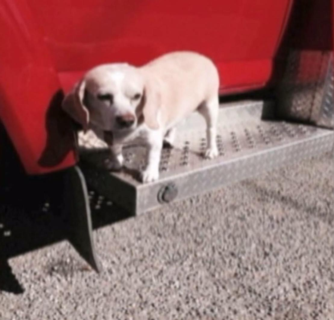 Beagle hitches ride on back of ambulance for 20 miles when Texas owner is taken to hospital http://t.co/qx7dPlKHMr http://t.co/wcb3wZfE6h