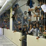 """""""Hunger strike until freedom"""": Fourth day of hunger strike in ... http://t.co/ZT4slwh33A #greece #rbnews #antireport http://t.co/iFcix07BEV"""