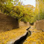 A carpet of gold. Autumn splendor. #Qazvin, #Iran. http://t.co/frgzIsuFb6