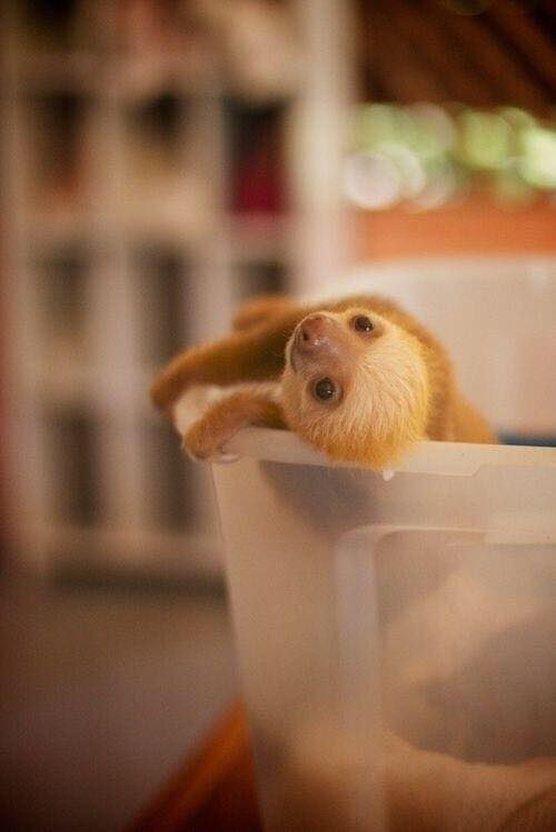 This is a baby sloth. http://t.co/HU1nZf6fRU