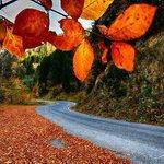 Karadenizimde bir şuh sonbahar sabahı.Hava dingin.Güneş güzellikleri selamlamakta.Meltem altın yaprakları okşamakta http://t.co/HkQOGlDGZ8
