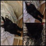 Кто может забрать кота,черного цвета,с зелеными глазами.нашла карочи в подьезде.люди добрые отзовитесь #ретвит http://t.co/yfYarwEt1F