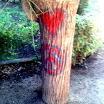 El PP denuncia las pintadas en los árboles de la Vega #Toledo http://t.co/xAZxrXp9i9 vía @tribunadetoledo http://t.co/7YFiQEIMtK