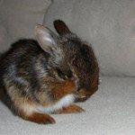 【キュン】「ウサギが照れたしぐさをすると…こんなにもかわいい」 http://t.co/ArQO1tFgVv ウサギ好きでなくともキュンとくる、シャイなバニーたちをご覧ください。 http://t.co/oDSntLhiTb