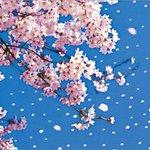 花の終わりの言い方集 http://t.co/Mr4DXl7EmL http://t.co/ag7lwPOE1X