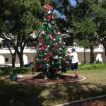 Tree is going up in downtown #Sarasota! http://t.co/kOmbrqiEag