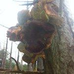 Ipv bosje bloemen; bosje paddenstoelen voor mn beste en lieve volgers.Maar welke? #dtv http://t.co/7xohf50rHL