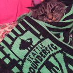 One hour! Time for the mighty Sea-Cats to assemble! #PawsUp #ScarvesUp #LAvSEA @SoundersFC @Meowshawn_Lynch ????????⚽️???? http://t.co/l8aqR4AYVt