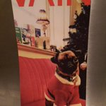 """""""@ShitChester: Thanks to @VAINchester for this Christmas card http://t.co/MQdXgvuSlf"""" the gorgeous Miss Peggy"""