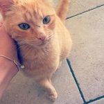 Jeune chat recherche une famille sur Lyon pour lui donner beaucoup damour. Si intéressé contacter moi :) http://t.co/0dvfJRCo6y