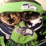 @SeahawksProShop we hear ya! Were wrapped up as tight as a #HawkTackle! #GoHawks http://t.co/Z1fy2YqSx4
