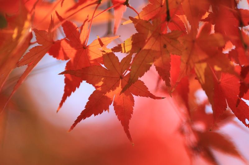 昭和記念公園の紅葉写真  #紅葉 http://t.co/13DlNULMcH