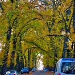 #FallFoliage seen on my run #Seattle #Seasons #Trees #RunChat http://t.co/ETJ59aZyFM