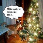"""@vicman093: Perro Navidad @Perrousuario @GataMashu @GatoMiauuuuuu @NoticieroAnimal @DonJediondo @cejaspobladas http://t.co/shxkTul4Tk"""