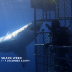 Shark Week is coming 1-7 Dec on Discovery. Are you ready? https://t.co/q6DZrwDz8K http://t.co/mk9gpwccEb