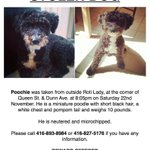 #Toronto please keep an eye out for this puppy! ???? #Parkdale #FindPoochie http://t.co/jdMUzUoKfU