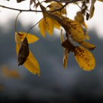 (Slideshow) Shades of autumn http://t.co/gTzb9MAstK #Pakistan #Quetta http://t.co/wTzYS19poh
