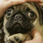 """NOT AS MUCH AS I LOVE IT!!! """"@TimesLIVE: Your dog loves you too: research http://t.co/p78t3Re2n8 http://t.co/gKhTYloQPI"""""""