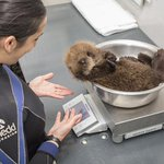 What would you like to be if you werent a writer?   An otter weigher. http://t.co/Tc7TwevoN7