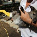 #Málaga | Este fin de semana moría el canguro del #ParquedelOeste que fue atacado por vándalos http://t.co/smoPIURQn1 http://t.co/USTSmLzGp0