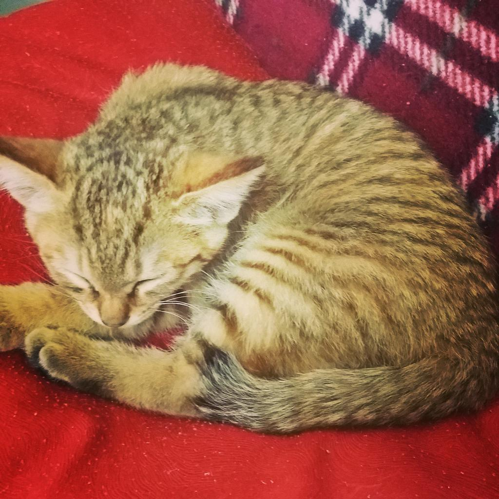 전생에 착한일 억만번은 해야 사랑받는 고양이로 태어나는거 같다. 덕을 쌓아야겠다 다음생 고양이로 태어나게 http://t.co/1A6BnHyC1r