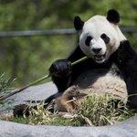 Toronto Zoo revenues down $8.3 million despite pandas' arrival http://t.co/QyMXa9SJy2 http://t.co/sliHkqs63T