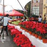 #Morelos es el primer productor de plantas de Nochebuena en el país http://t.co/jefCmfC1FI    http://t.co/kcp1GZG6Wk