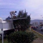 Poda de árboles en Blvd. Ramón G Bonfil @Pachuca_ http://t.co/OeE3Uw1xDx