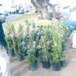 Reforestación de canelón central de Av Constituyentes @Pachuca_ http://t.co/DTmcqg2AOm