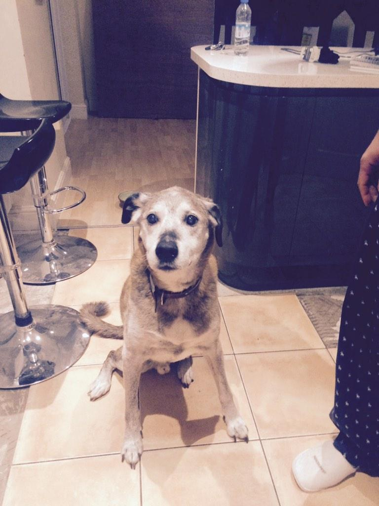 Does Anyone know who this dog belongs too ?? It's old & friendly & lost, I'm i Prenton Wirral please RT http://t.co/gYtXixtHmR