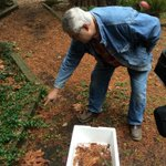 Olympia man finding hundreds of newts in his yard, hes moving them along so he doesnt step on them. Story 6:30p. http://t.co/CIBrKjAh4p