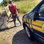 QUE CHINELÃO! RT @felipedaroit: Homem é preso em flagrante furtando telas de proteção da Br448, em Canoas. http://t.co/dMFXf6WQ7h