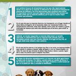 Las bajas temperaturas pueden afecta a nuestras mascotas, por lo que te invitamos a que sigas estas recomendaciones: http://t.co/wxWTR9CQlb