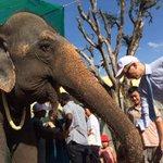 Farewell to #Cambodias loved Sambo. Shes off to ELIE Mondulkiri. Thanks to @usaid, @USEmbPhnomPenh, @WinrockIntl http://t.co/JcLQu4sIpy