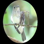 New bird species discovered in forests of Indonesia http://t.co/dQvG8KOPDj http://t.co/1uIPzfeflB