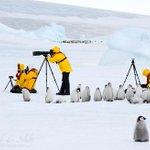 コウテイペンギンのヒナに見学される撮影隊の図。 http://t.co/Xk7GX4j80J