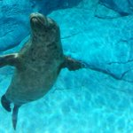 Harbour seals dies at Zoo after it was trapped in an underwater drain. Next on Radio Noon 89.3fm/990am #cbcmb http://t.co/Y6clFnx0Xx