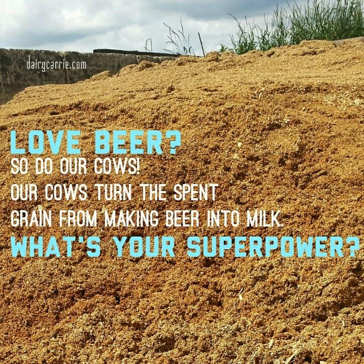 Speaking of no food waste... did you know cows are awesome at recycling food we can't eat? #FoodieChats #drinkup http://t.co/DxhixZqawQ