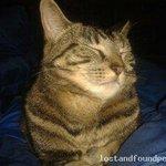 A female cat was lost on 22/11/2014 in St Lukes, #Cork City http://t.co/AZImNpwTxU #lpie http://t.co/ZJn1qrxFp2