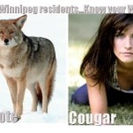 Coyotes sighted along River Trail in St. Vital #Winnipeg Be careful, travel in pairs& know what to look for!... http://t.co/nMpmE66ajt
