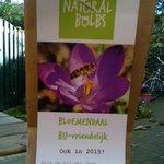 Scholen in Bloemendaal en #Heemstede planten 20.000 bio-bloembollen voor bijen en vlindersLaat U de bijen ook zoemen http://t.co/N19OM29lYD
